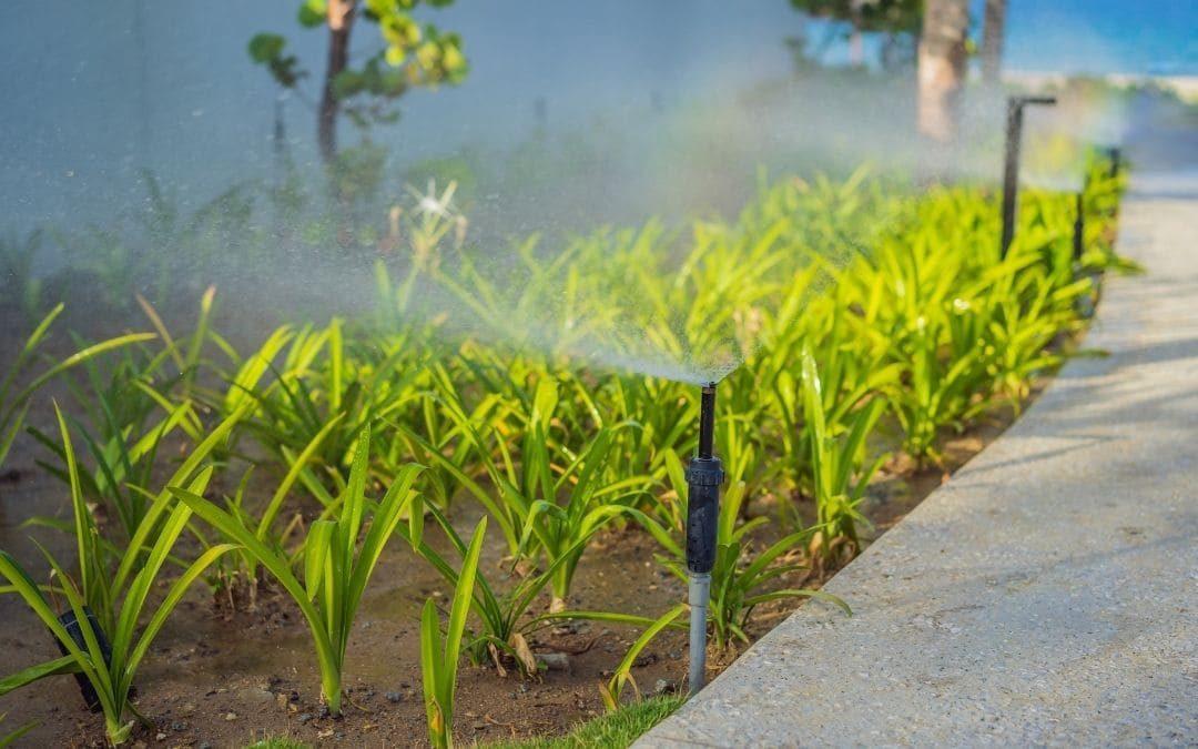 Instalación de riego automático: más ahorro y mejor salud para la planta