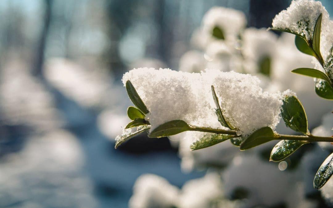 Prepara tu jardín para la llegada del frío