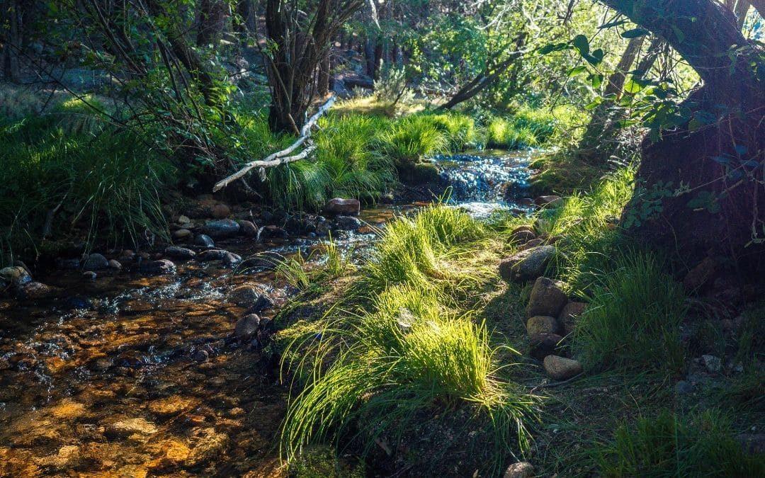 Limpieza y protección del río Guadarrama