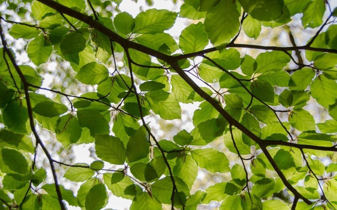 Las peculiaridades de los árboles de hoja caduca