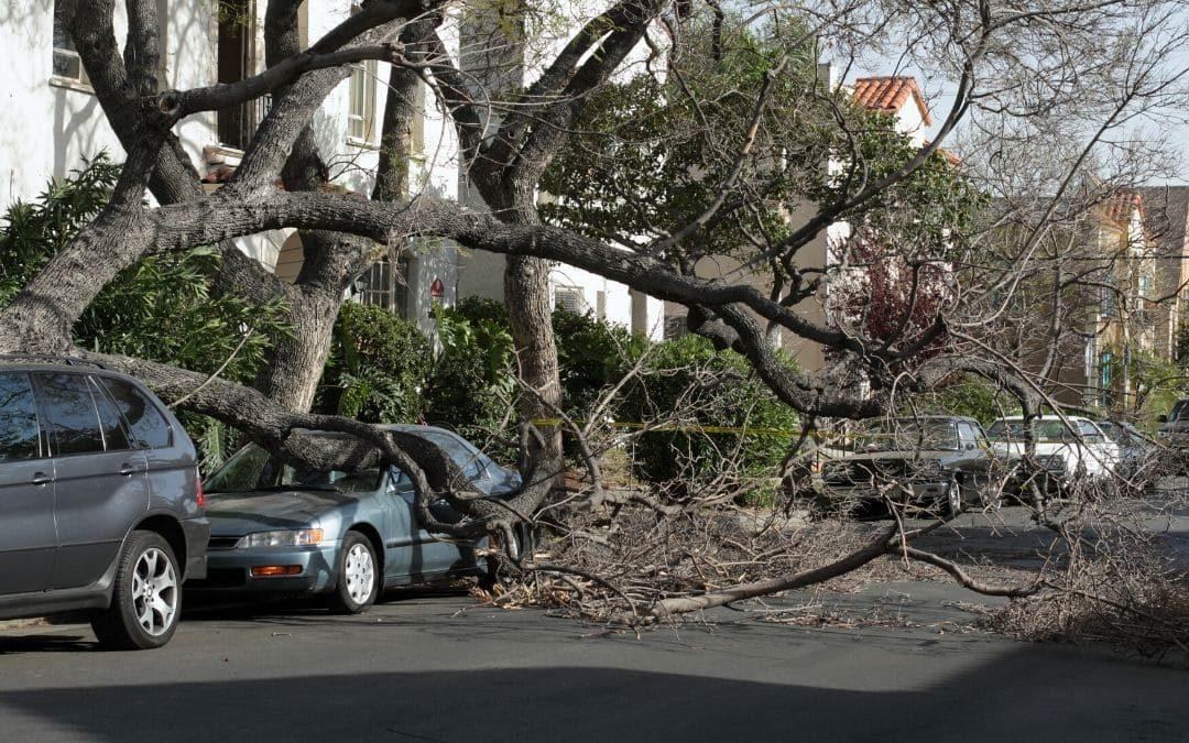 Caída de árboles debido a fuertes vientos