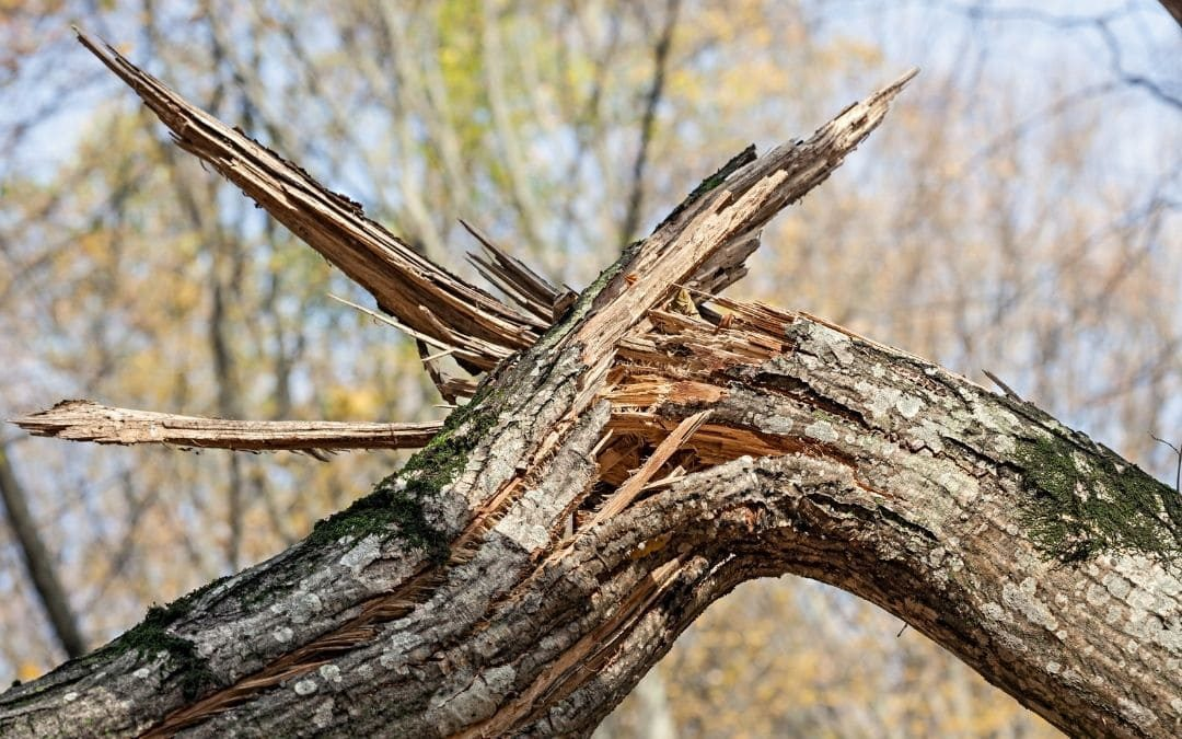 Casi 700.000 árboles dañados por culpa de Filomena