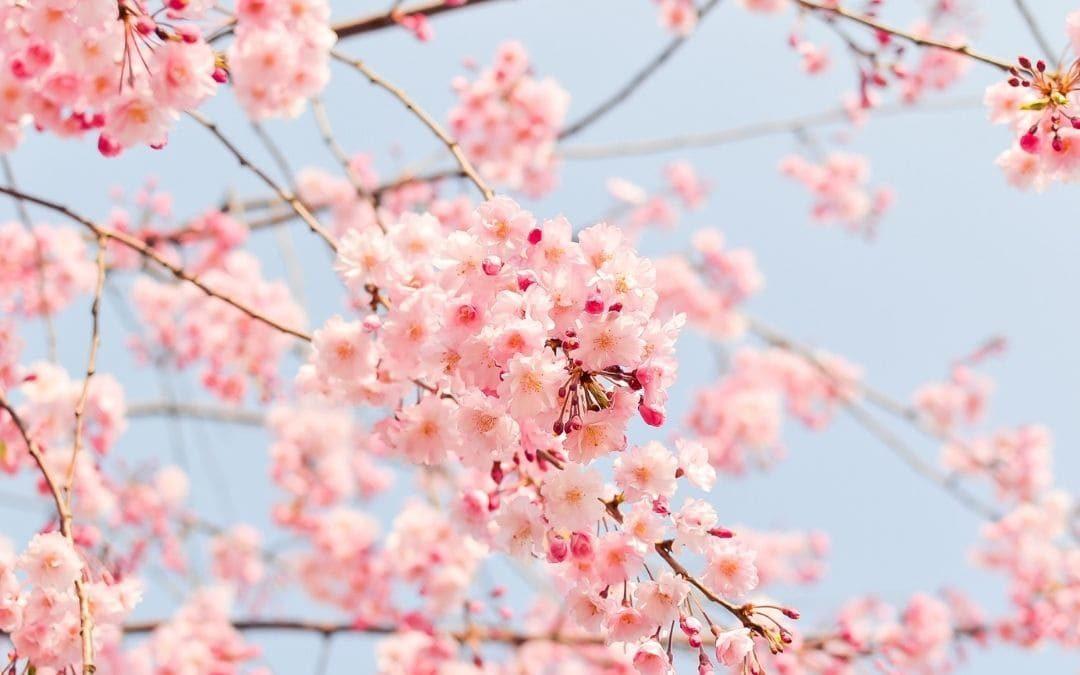 Las podas de primavera ¿Qué plantas podar?