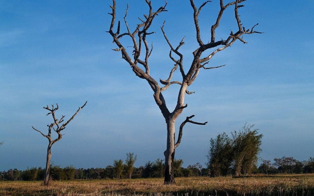 ¿Cómo identificar un árbol muerto?