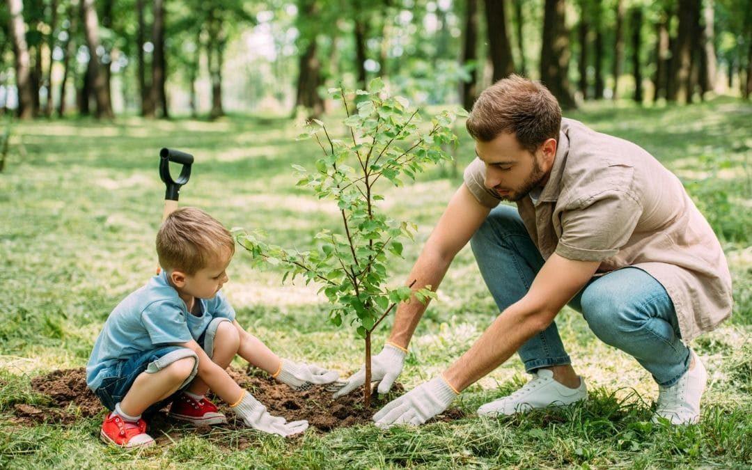 Cómo y cuándo plantar un árbol